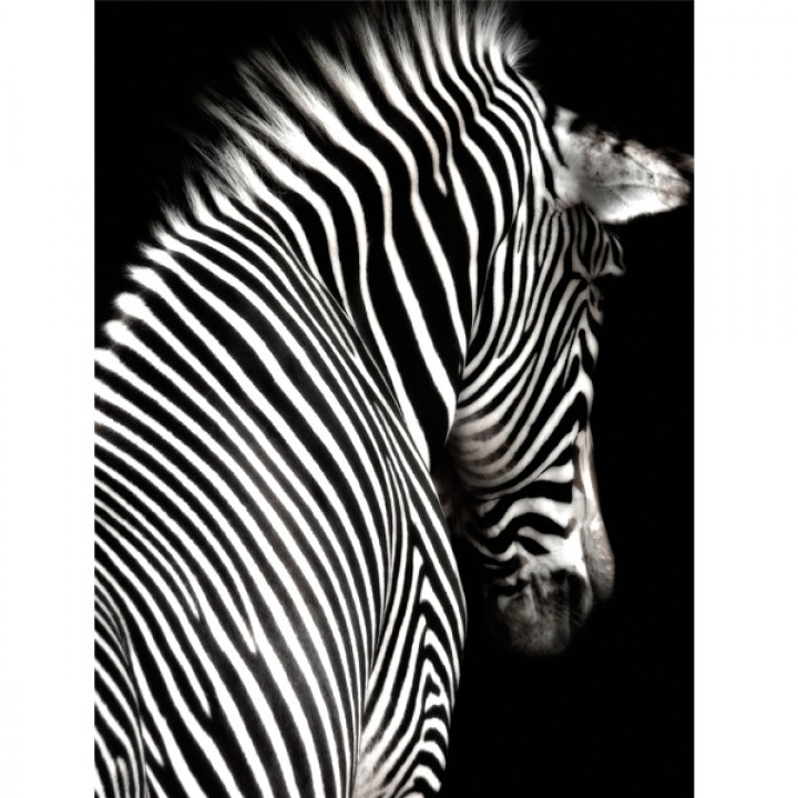 Картина АGL3-013 в раме 90*120*4,5 глянцевая Зебра