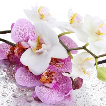 Панель декоративная матовая 2440х600х4 мм Орхидея PM 006 (кухонный фартук МДФ)